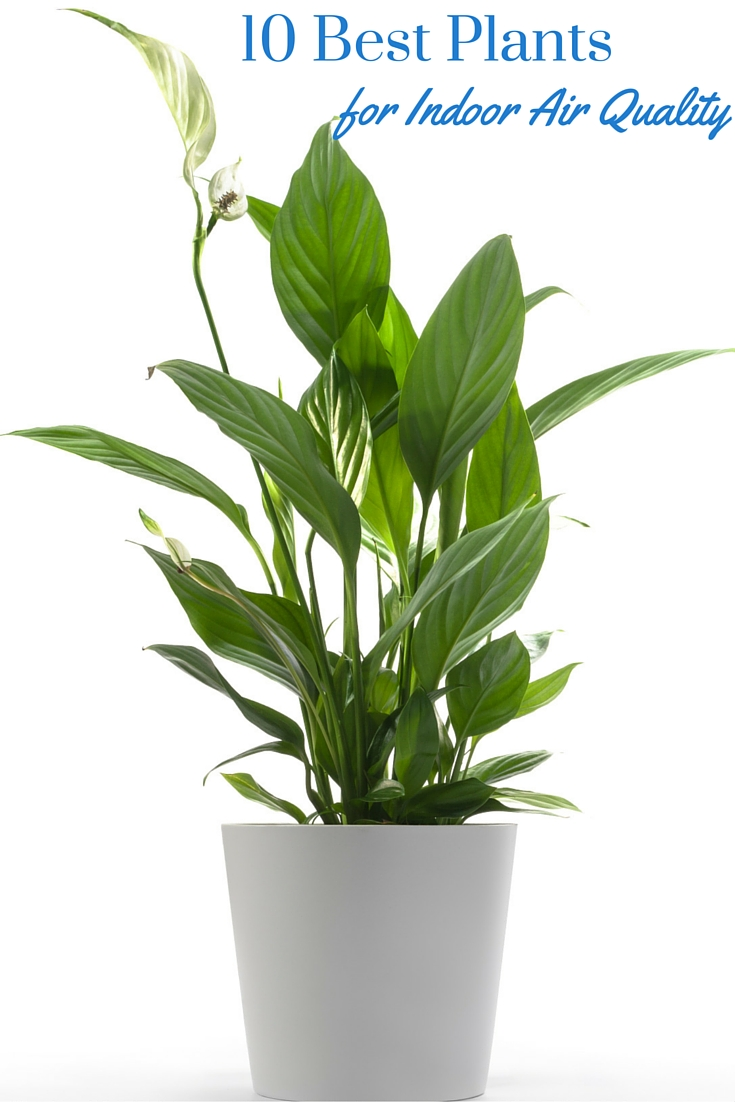 Best Indoor Plants 100 Large Indoor Plants Genial Easiest
