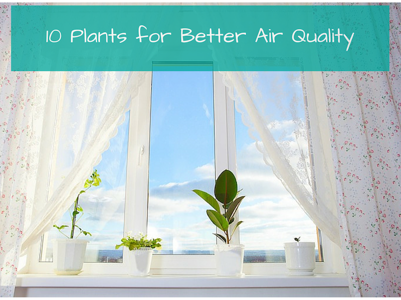 10 Plants For Better Air Quality