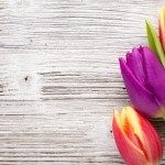 Spring Equinox Celebration Ideas