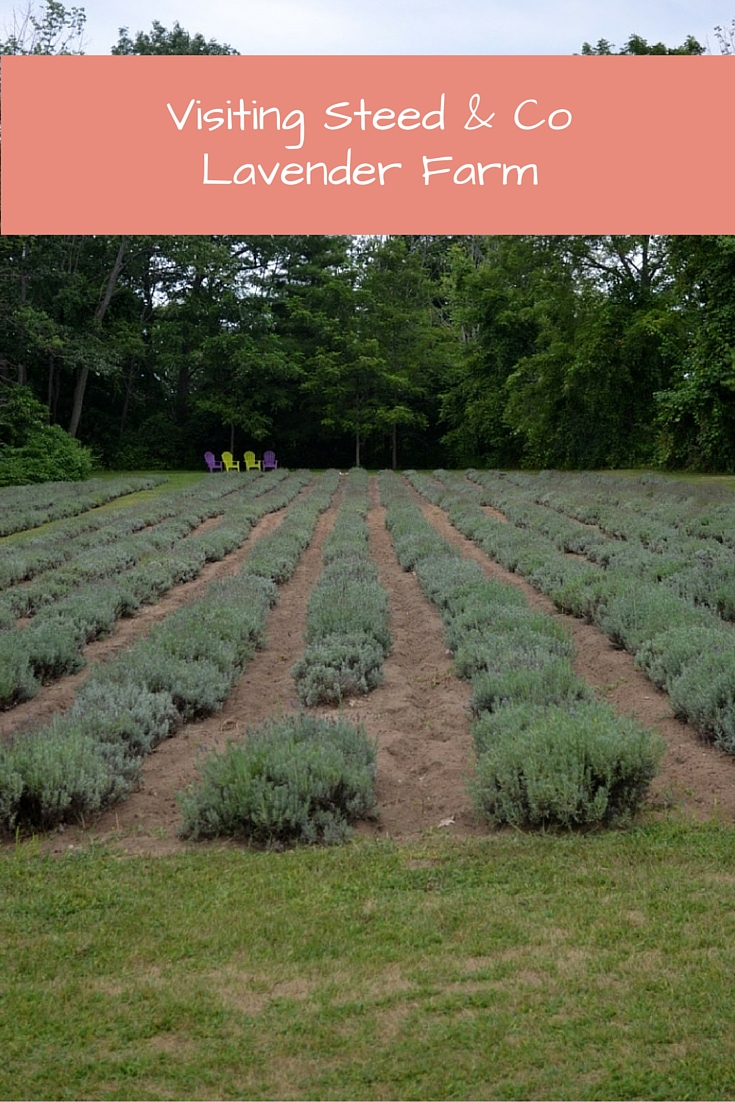 Visiting Steed & Co Lavender Farm