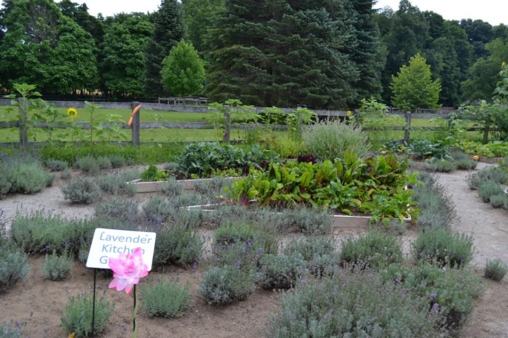 Visiting Steed & Company Lavender Farm