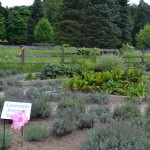 Visiting Steed & Company Lavender Farm