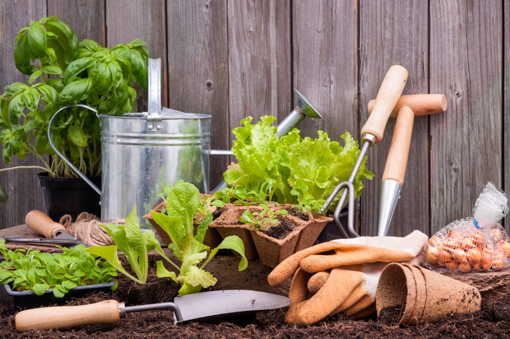 Natural Gardening Tips and Activities