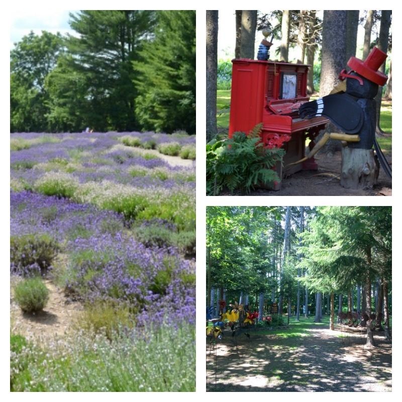 Visiting Sparta, Ontario is a must-do for anyone in the near. It has the most beautiful lavender farm, fun gift shops and the most unique, hidden garden forest/store. It's an awesome place for families!