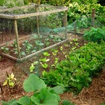 Natural Pest Remedies for the Garden